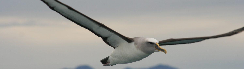 Albatross Lawyers